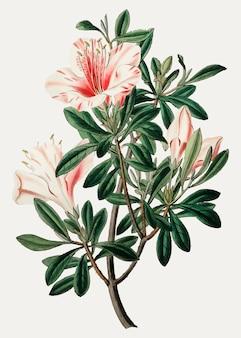 Flor rosa vintage para decoracion.