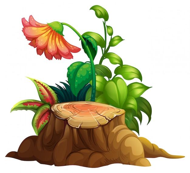 Flor y tocón de madera en blanco
