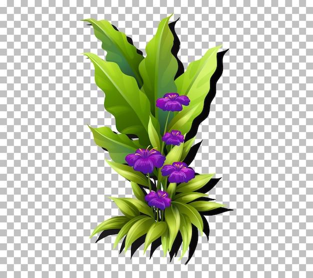 Flor tropical y hoja en transparente.