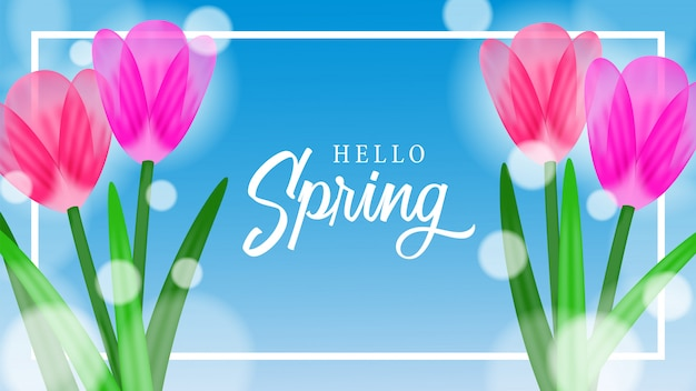 Flor de tulipán flor con cielo para la primavera