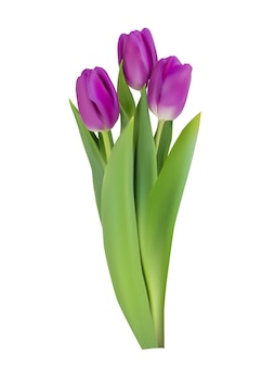 Flor de tulipanes realista aislado sobre fondo blanco.