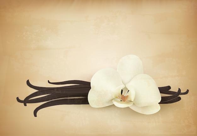 Flor de vainilla sobre fondo retro