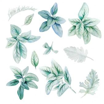 Flora de plata, hojas, verde brillante de acuarela
