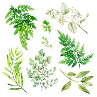 Flora silvestre, helechos y adiantum, acuarela brillante verde