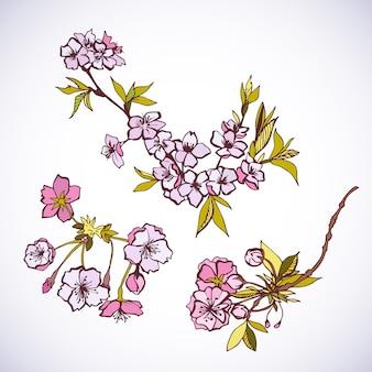Florecientes elementos decorativos de sakura.