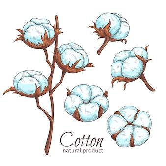 Flores de algodón color dibujado a mano