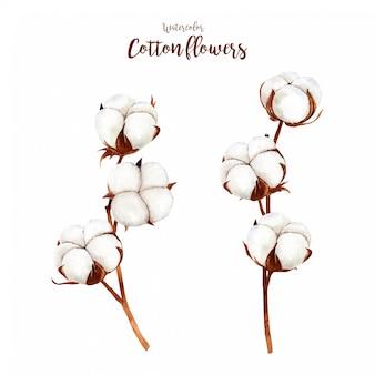 Flores de algodón rústico acuarela
