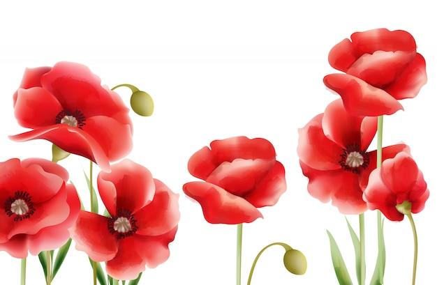 Flores de amapola acuarela sobre fondo aislado.