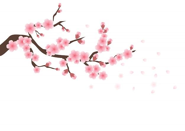 Flores de cerezo sakura flores rosadas