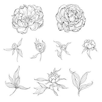 Flores de contorno blanco y negro y capullos y hojas de flores de peonía