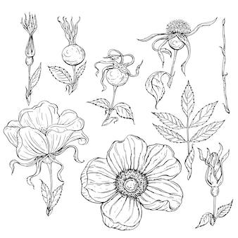 Flores de contorno en blanco y negro y capullos y hojas de flores de rosa salvaje