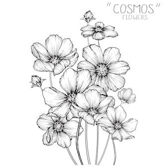 Flores de cosmos y dibujos de hojas