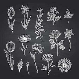 Flores dibujadas a mano en pizarra negra