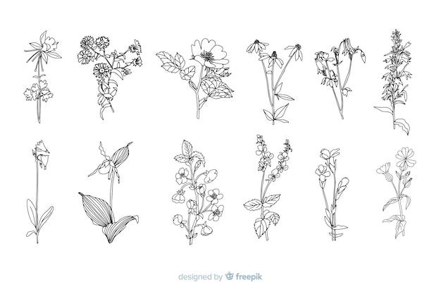Flores dibujadas a mano realistas