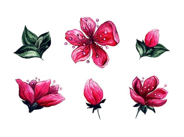 Flores de flor de cerezo floral acuarela