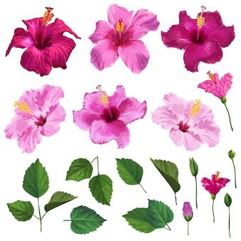 Flores de hibisco, hojas y ramas.