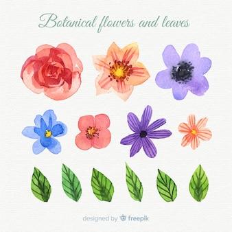 Flores y hojas botánicas en acuarela