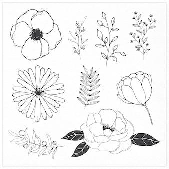 Flores y hojas dibujados a mano