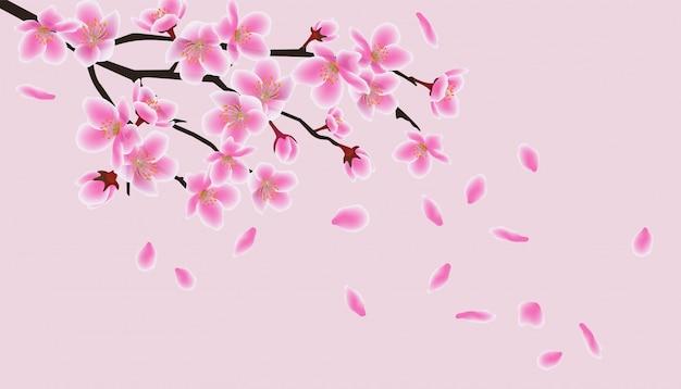 Flores japonesas de sakura asiático, flor de cerezo rosa.