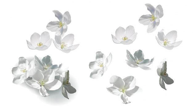 Flores de jazmín blanco volando, cayendo y en el montón