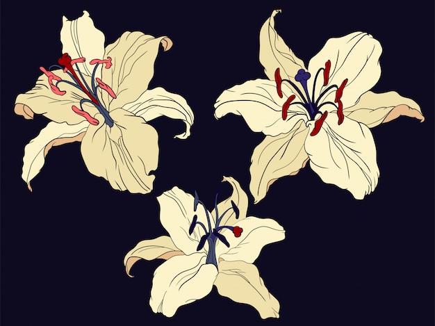 Flores de lirio oriental