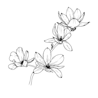 Flores de magnolia
