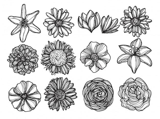 Flores a mano dibujo y croquis en blanco y negro.