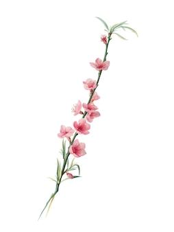 Flores de melocotón de la ilustración de pomona italiana