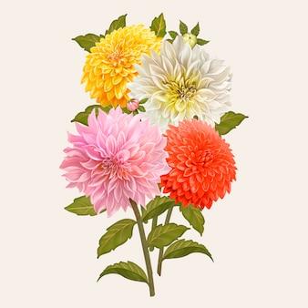 Flores mezcladas de dalia