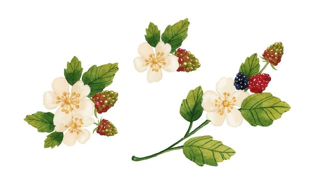 Flores de primavera y bayas elementos acuarela aislados sobre fondo blanco