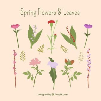 Flores primaverales y hojas