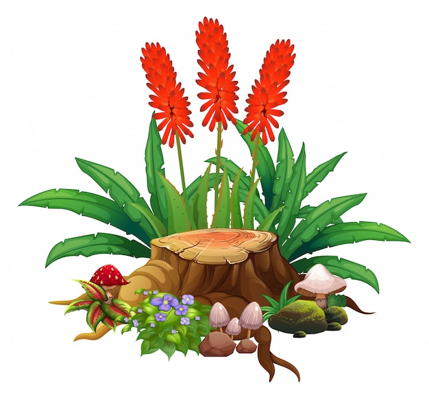 Flores rojas y madera