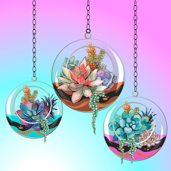 Flores suculentas en macetas de vidrio. vector.