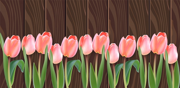 Flores de tulipán blanco