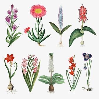 Flores vector ilustración de naturaleza vintage, remezclada de las obras de arte de robert jacob gordon