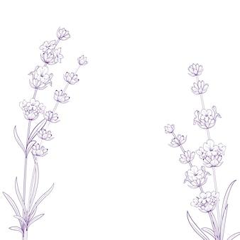Flores de verano con caligrafía signo hierbas de lavanda. manojo de flor de lavanda aislado sobre fondo blanco.