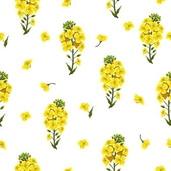 Flores de violación de patrones sin fisuras y hojas, canola.