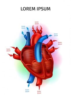 Flujo de sangre en el corazón humano realista vector esquema