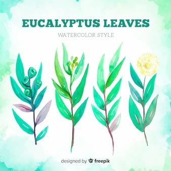 Fondo acuarela hojas eucalipto
