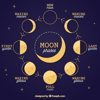 Fondo azul oscuro de fases lunares y estrellas