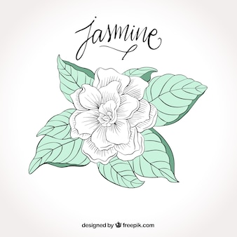 Fondo de bonita flor blanca dibujada a mano
