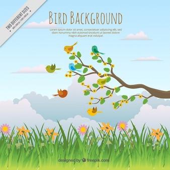 Fondo de bonito paisaje con pájaros