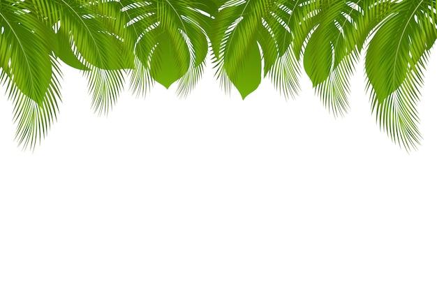 Fondo con borde de verano tropical exótico con hojas de palmera y hoja de selva