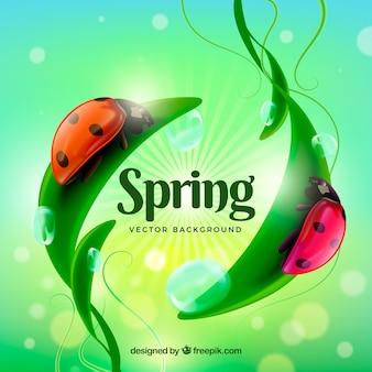 Fondo borroso de primavera con mariquita