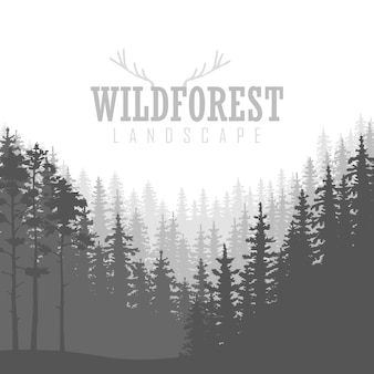 Fondo de bosque de coníferas silvestres. pino, paisaje natural, madera panorama natural.
