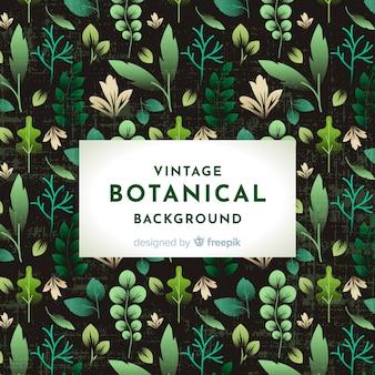 Fondo botánico retro