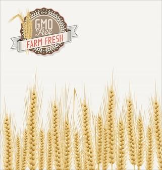 Fondo de campo de trigo