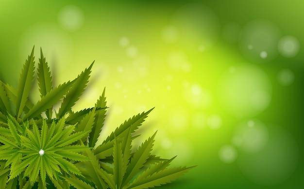 Fondo de cannabis hoja verde droga marihuana hierba