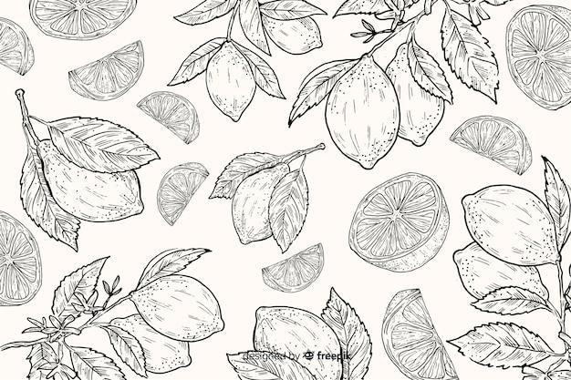 Fondo de comida natural dibujado a mano