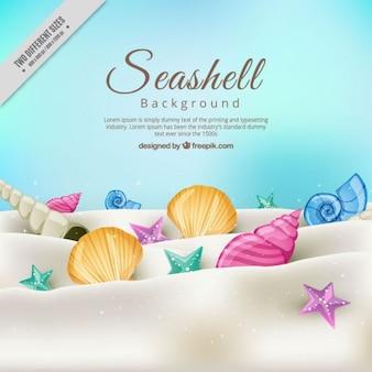 Fondo de conchas de playa en la arena